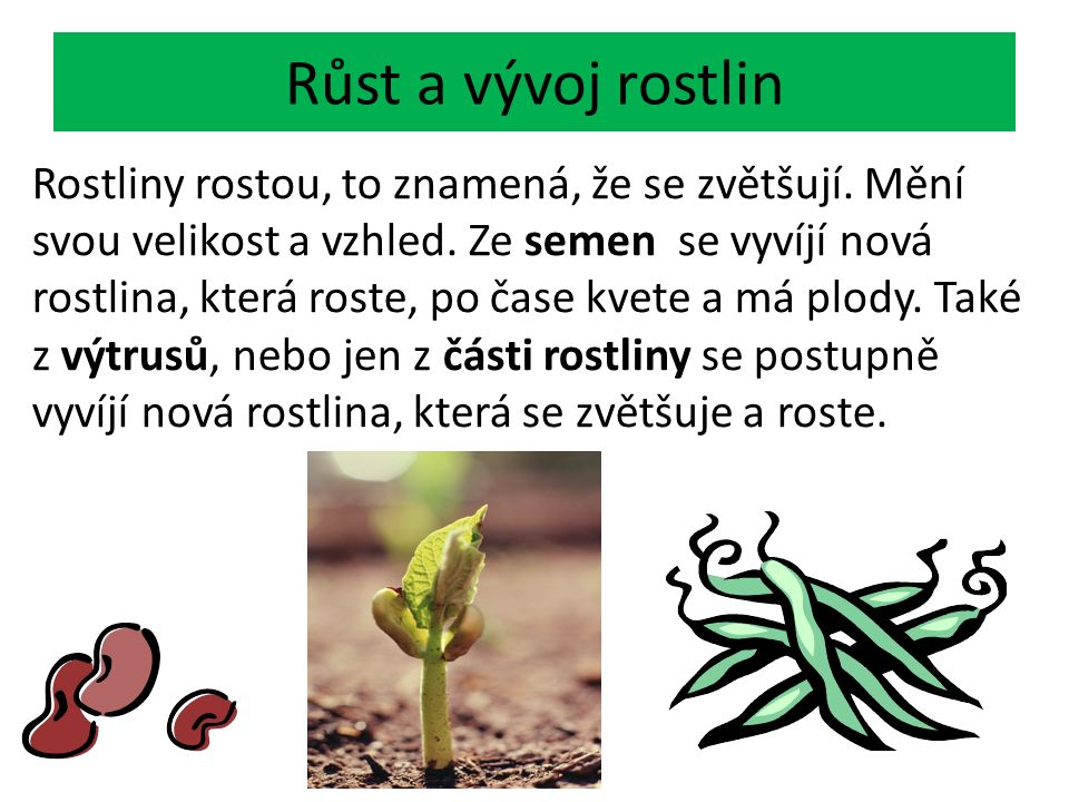 Růst a vývoj rostlin Rostliny rostou, to znamená, že se zvětšují. Mění svou velikost a vzhled. Ze semen se vyvíjí nová rostlina, která roste, po čase
