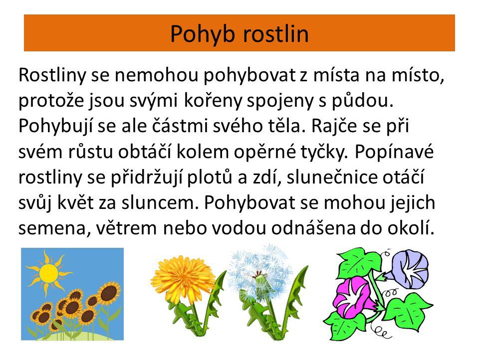 Pohyb rostlin Rostliny se nemohou pohybovat z místa na místo, protože jsou svými kořeny spojeny s půdou.