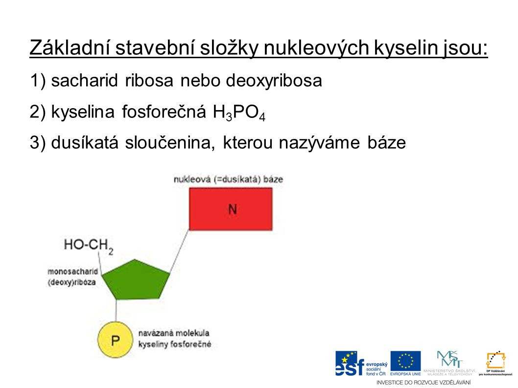 Základní stavební složky nukleových kyselin jsou: 1) sacharid ribosa nebo deoxyribosa 2) kyselina fosforečná H 3 PO 4 3) dusíkatá sloučenina, kterou nazýváme báze