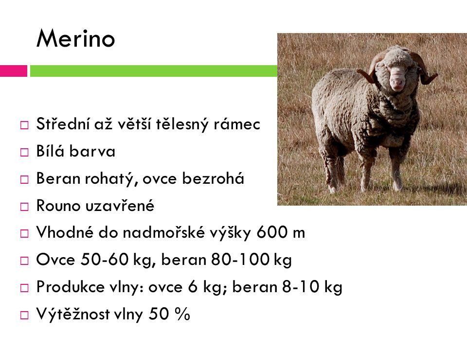 Merino  Střední až větší tělesný rámec  Bílá barva  Beran rohatý, ovce bezrohá  Rouno uzavřené  Vhodné do nadmořské výšky 600 m  Ovce 50-60 kg, beran 80-100 kg  Produkce vlny: ovce 6 kg; beran 8-10 kg  Výtěžnost vlny 50 %
