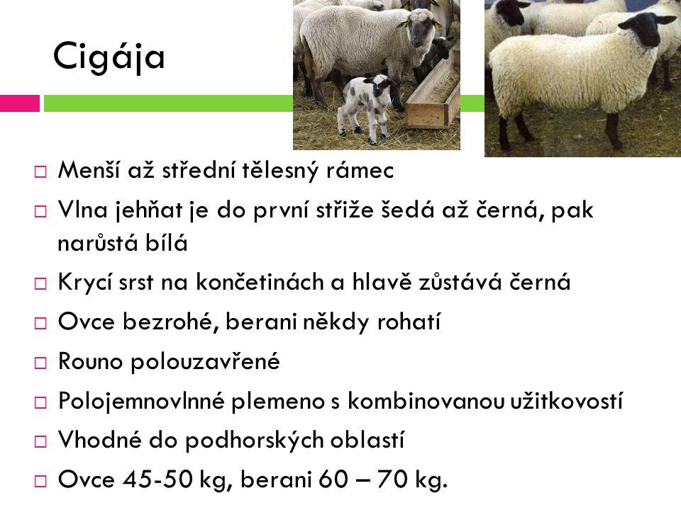 Cigája  Menší až střední tělesný rámec  Vlna jehňat je do první střiže šedá až černá, pak narůstá bílá  Krycí srst na končetinách a hlavě zůstává černá  Ovce bezrohé, berani někdy rohatí  Rouno polouzavřené  Polojemnovlnné plemeno s kombinovanou užitkovostí  Vhodné do podhorských oblastí  Ovce 45-50 kg, berani 60 – 70 kg.