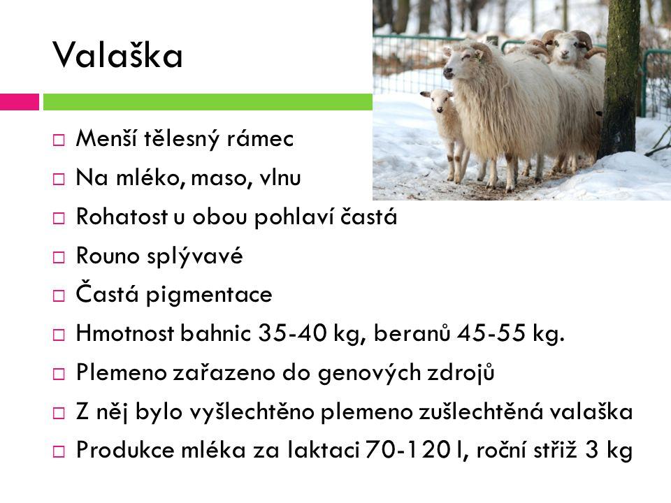 Valaška  Menší tělesný rámec  Na mléko, maso, vlnu  Rohatost u obou pohlaví častá  Rouno splývavé  Častá pigmentace  Hmotnost bahnic 35-40 kg, beranů 45-55 kg.