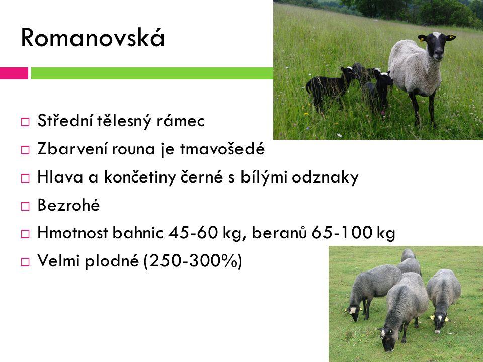 Romanovská ovce  Střední tělesný rámec  Zbarvení rouna je tmavošedé  Hlava a končetiny černé s bílými odznaky  Bezrohé  Hmotnost bahnic 45-60 kg, beranů 65-100 kg  Velmi plodné (250-300%)