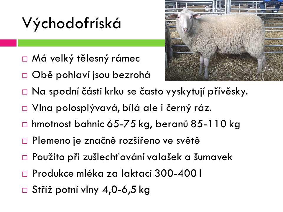 Východofríská ovce  Má velký tělesný rámec  Obě pohlaví jsou bezrohá  Na spodní části krku se často vyskytují přívěsky.