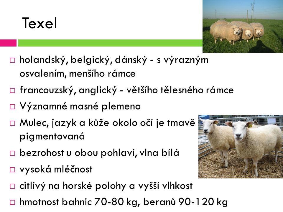 Texel  holandský, belgický, dánský - s výrazným osvalením, menšího rámce  francouzský, anglický - většího tělesného rámce  Významné masné plemeno  Mulec, jazyk a kůže okolo očí je tmavě pigmentovaná  bezrohost u obou pohlaví, vlna bílá  vysoká mléčnost  citlivý na horské polohy a vyšší vlhkost  hmotnost bahnic 70-80 kg, beranů 90-120 kg