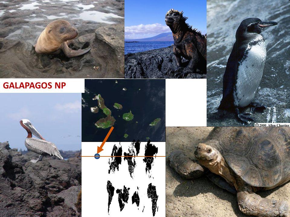 9.10.2013 Galápagos NP GALAPAGOS NP