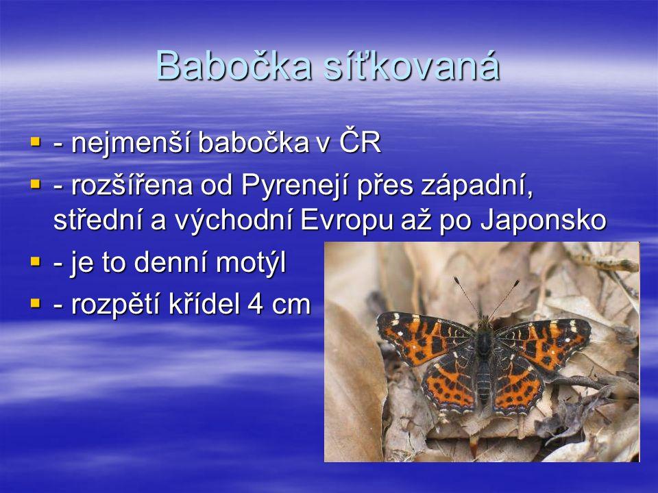 Babočka síťkovaná ---- nejmenší babočka v ČR ---- rozšířena od Pyrenejí přes západní, střední a východní Evropu až po Japonsko ---- je to denní motýl ---- rozpětí křídel 4 cm