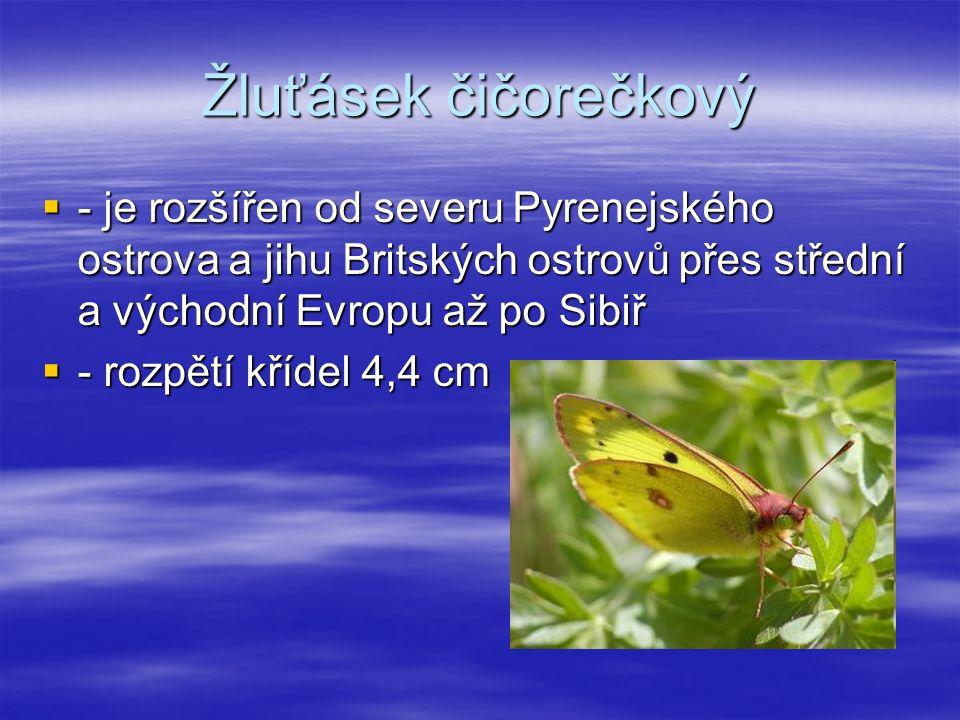 Žluťásek čičorečkový  - je rozšířen od severu Pyrenejského ostrova a jihu Britských ostrovů přes střední a východní Evropu až po Sibiř  - rozpětí křídel 4,4 cm