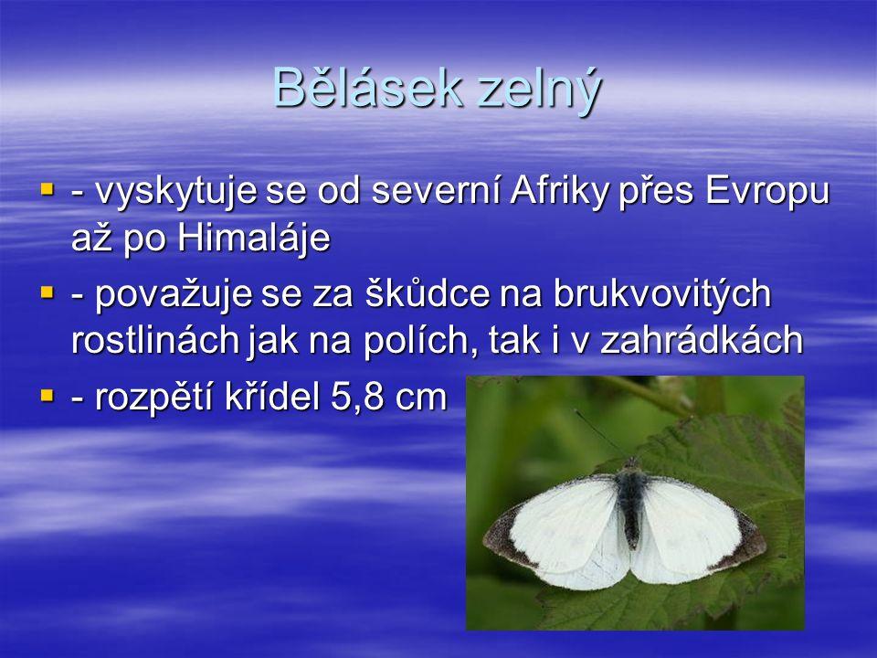 Bělásek zelný  - vyskytuje se od severní Afriky přes Evropu až po Himaláje  - považuje se za škůdce na brukvovitých rostlinách jak na polích, tak i v zahrádkách  - rozpětí křídel 5,8 cm
