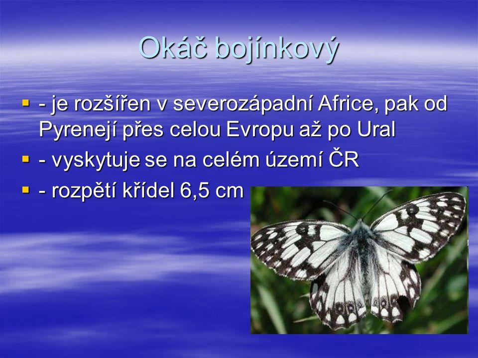 Okáč bojínkový  - je rozšířen v severozápadní Africe, pak od Pyrenejí přes celou Evropu až po Ural  - vyskytuje se na celém území ČR  - rozpětí křídel 6,5 cm