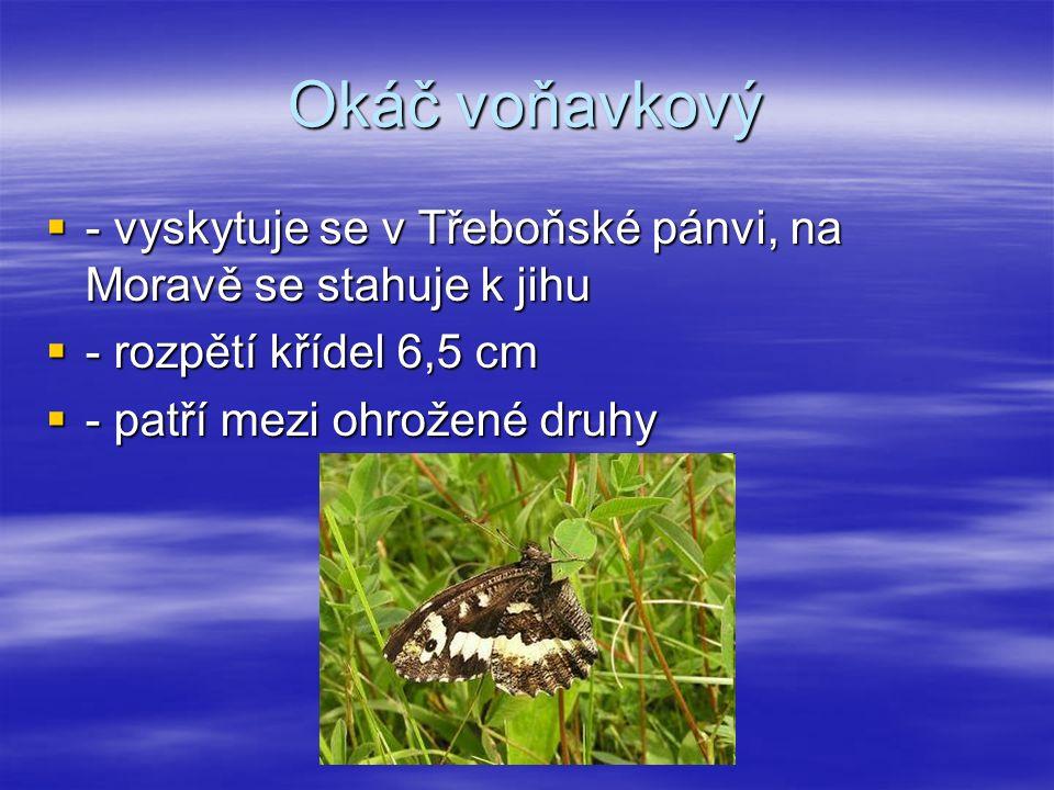 Okáč voňavkový  - vyskytuje se v Třeboňské pánvi, na Moravě se stahuje k jihu  - rozpětí křídel 6,5 cm  - patří mezi ohrožené druhy
