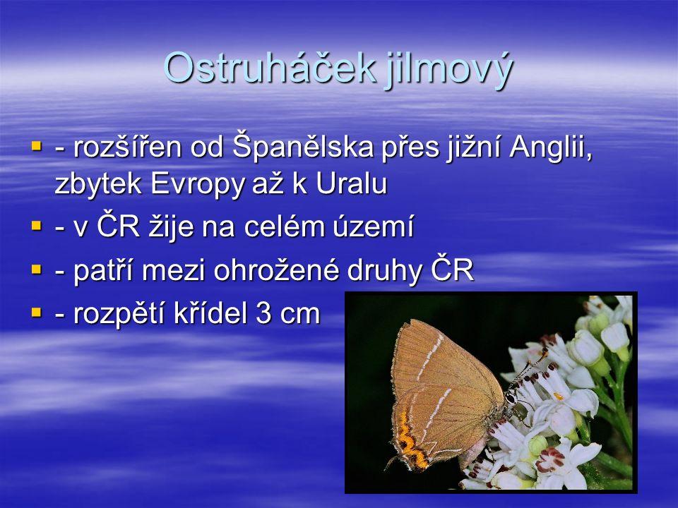 Ostruháček jilmový  - rozšířen od Španělska přes jižní Anglii, zbytek Evropy až k Uralu  - v ČR žije na celém území  - patří mezi ohrožené druhy ČR  - rozpětí křídel 3 cm