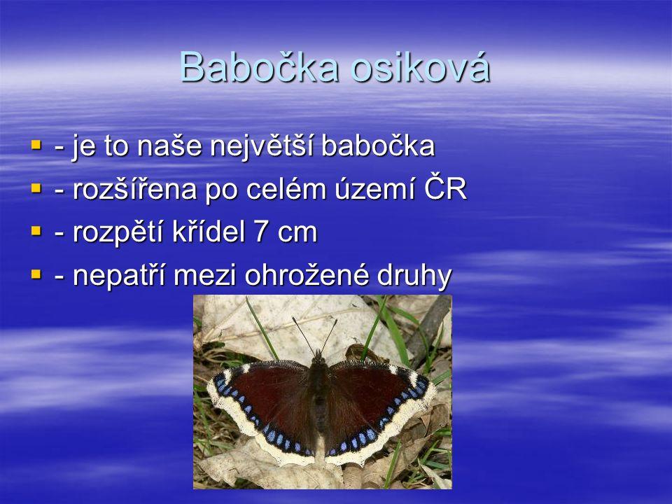 Babočka osiková  - je to naše největší babočka  - rozšířena po celém území ČR  - rozpětí křídel 7 cm  - nepatří mezi ohrožené druhy