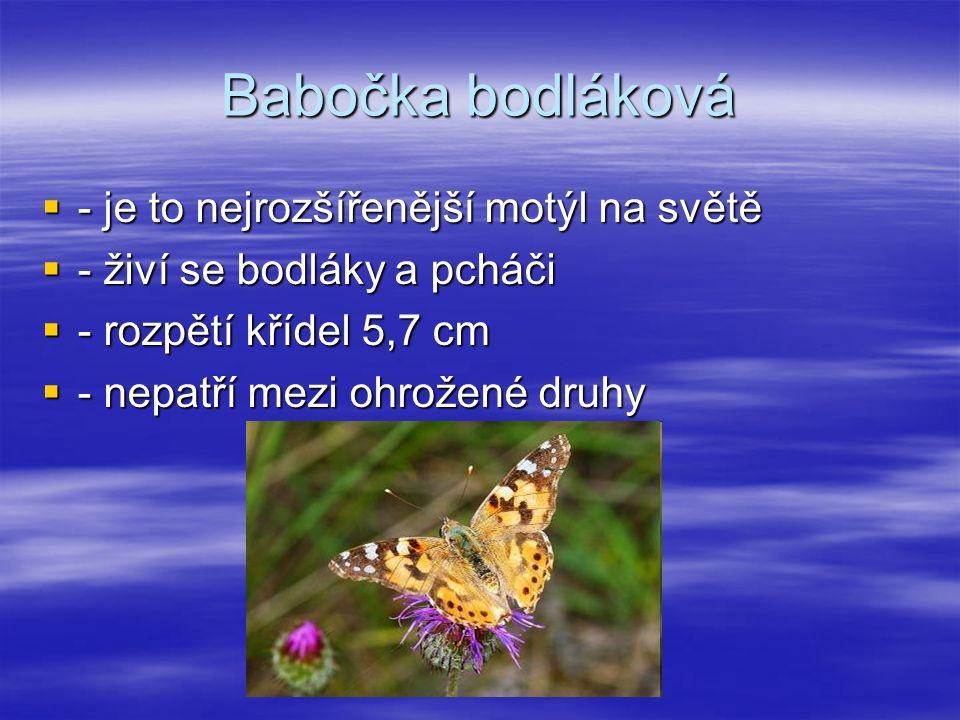 Babočka bodláková  - je to nejrozšířenější motýl na světě  - živí se bodláky a pcháči  - rozpětí křídel 5,7 cm  - nepatří mezi ohrožené druhy