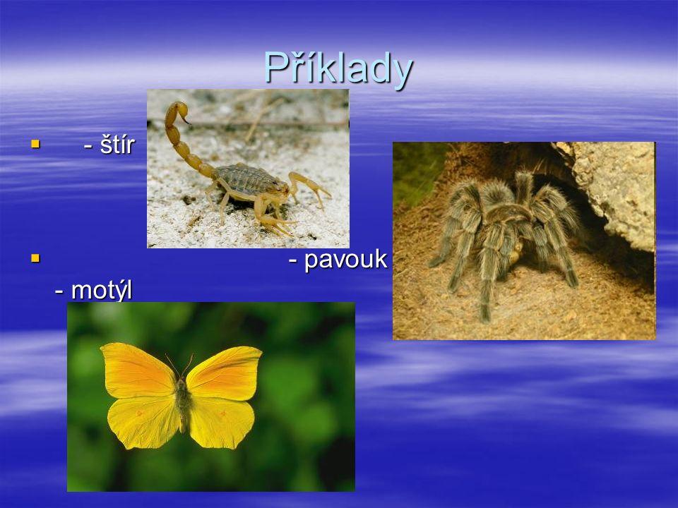 Příklady  - štír  - pavouk - motýl
