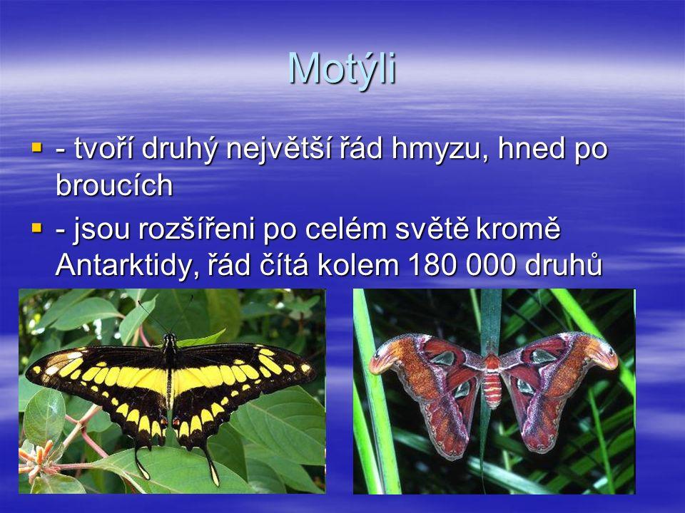 Motýli ---- tvoří druhý největší řád hmyzu, hned po broucích ---- jsou rozšířeni po celém světě kromě Antarktidy, řád čítá kolem 180 000 druhů