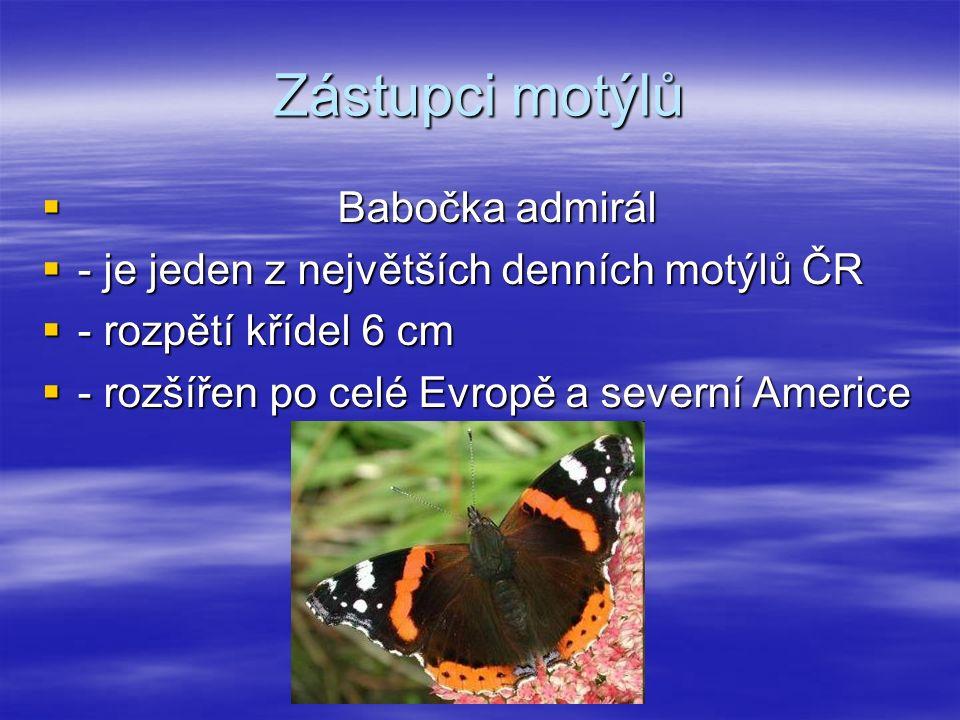 Zástupci motýlů  Babočka admirál  - je jeden z největších denních motýlů ČR  - rozpětí křídel 6 cm  - rozšířen po celé Evropě a severní Americe
