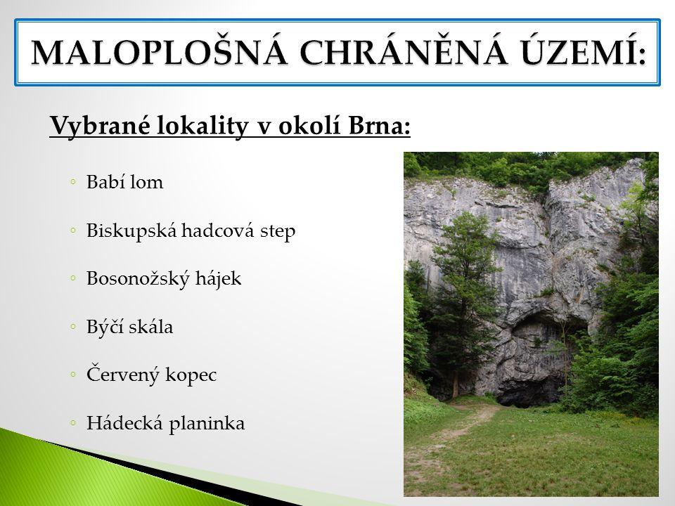 Vybrané lokality v okolí Brna: ◦ Babí lom ◦ Biskupská hadcová step ◦ Bosonožský hájek ◦ Býčí skála ◦ Červený kopec ◦ Hádecká planinka