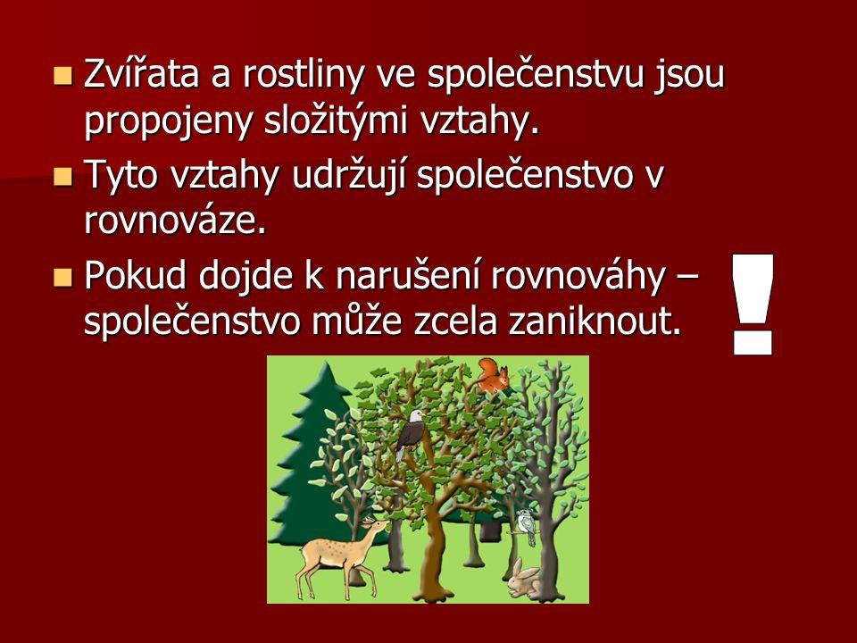 Les je přirozené společenstvo organismů.Les je přirozené společenstvo organismů.