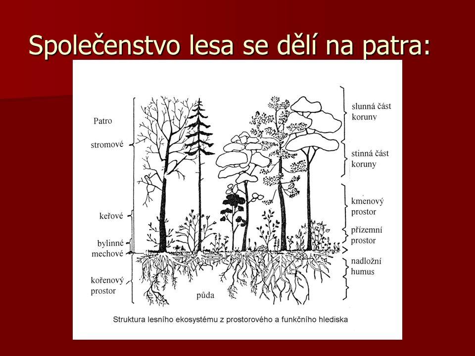 Společenstvo lesa se dělí na patra:
