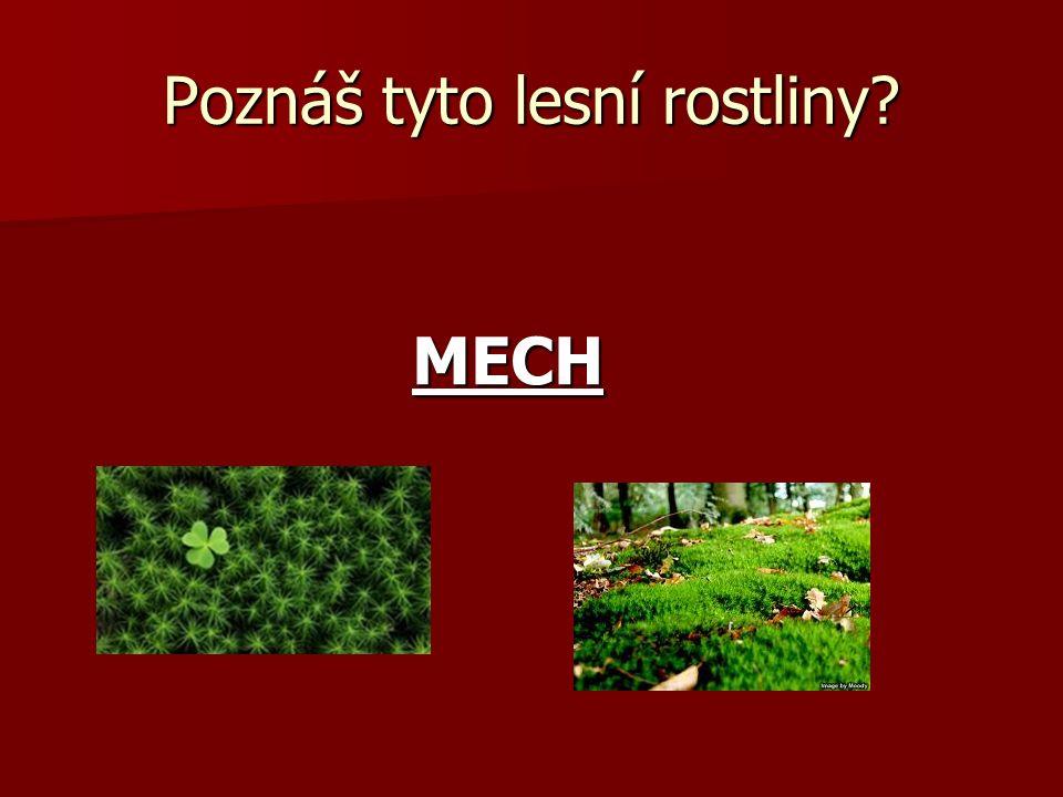 Poznáš tyto lesní rostliny? MECH