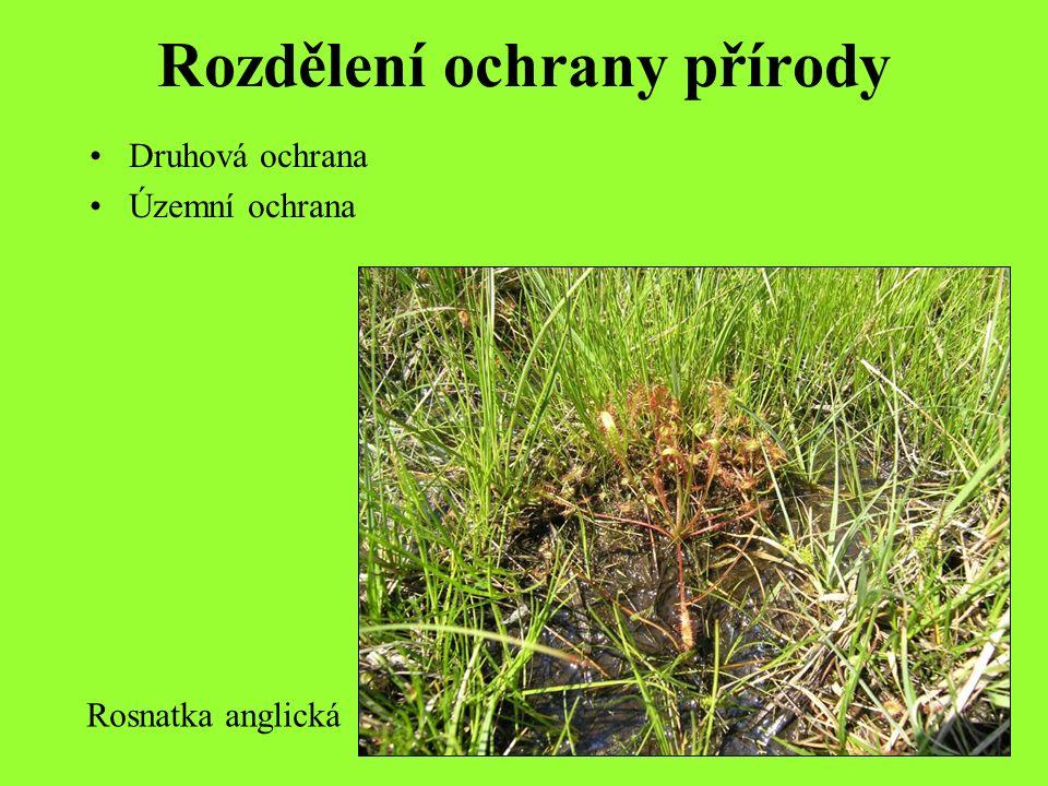 Druhová ochrana Chrání organismy i s jejich sídly a prostředím Účinnost závisí na druhu, ale musí se kombinovat s územní ochranou nebo obecně s ochranou krajiny