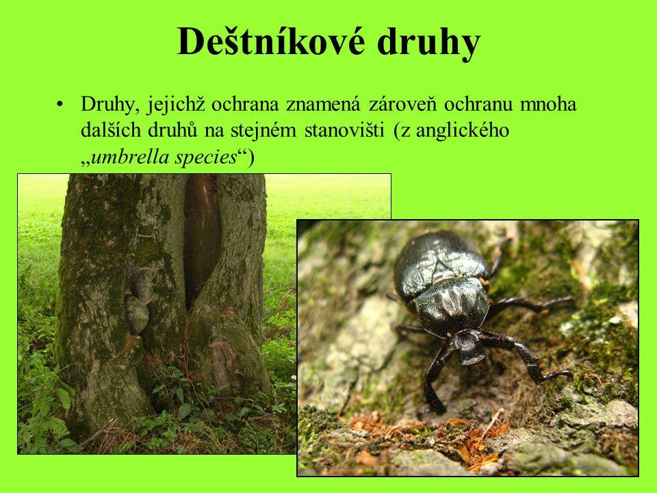 """Deštníkové druhy Druhy, jejichž ochrana znamená zároveň ochranu mnoha dalších druhů na stejném stanovišti (z anglického """"umbrella species )"""