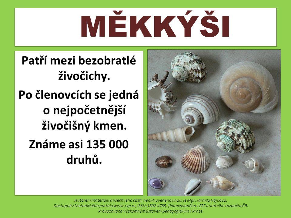 ŠKEBLE RYBNIČNÁ Je největší druh měkkýše v České republice.