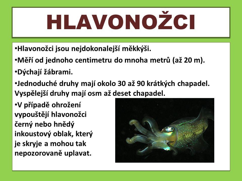 HLAVONOŽCI Hlavonožci jsou nejdokonalejší měkkýši. Měří od jednoho centimetru do mnoha metrů (až 20 m). Dýchají žábrami. Jednoduché druhy mají okolo 3
