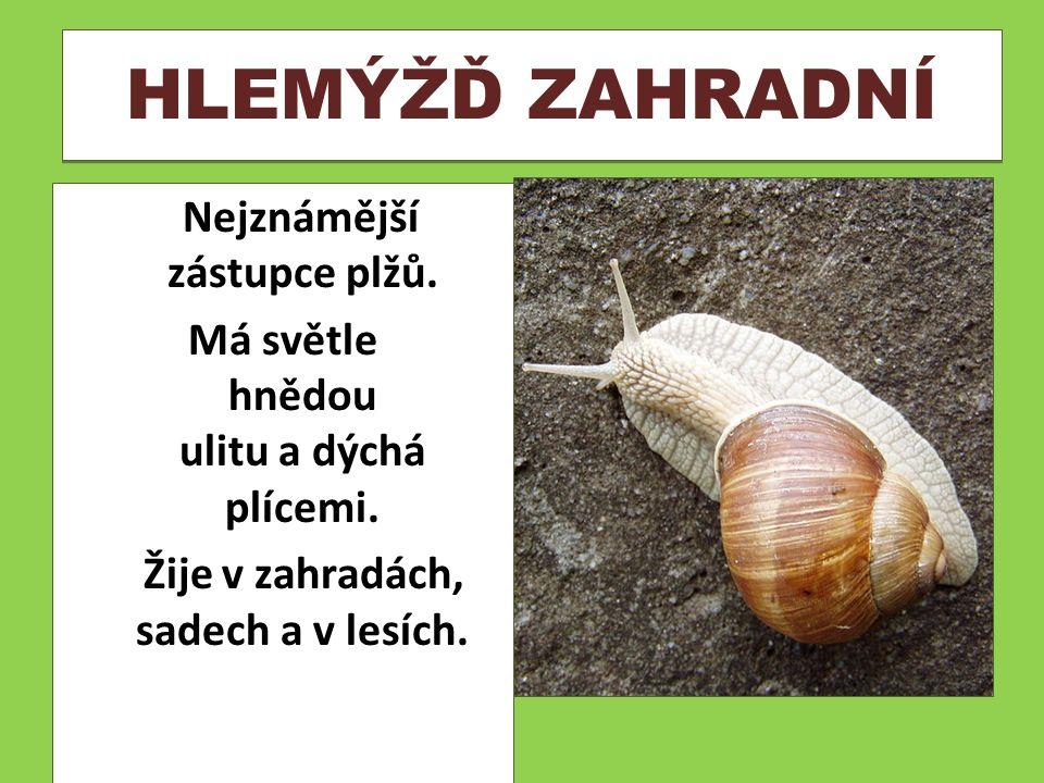 SLIMÁK NEJVĚTŠÍ Je druh suchozemského plže.