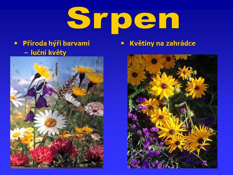 Příroda hýří barvami Příroda hýří barvami − luční květy − luční květy Květiny na zahrádce Květiny na zahrádce