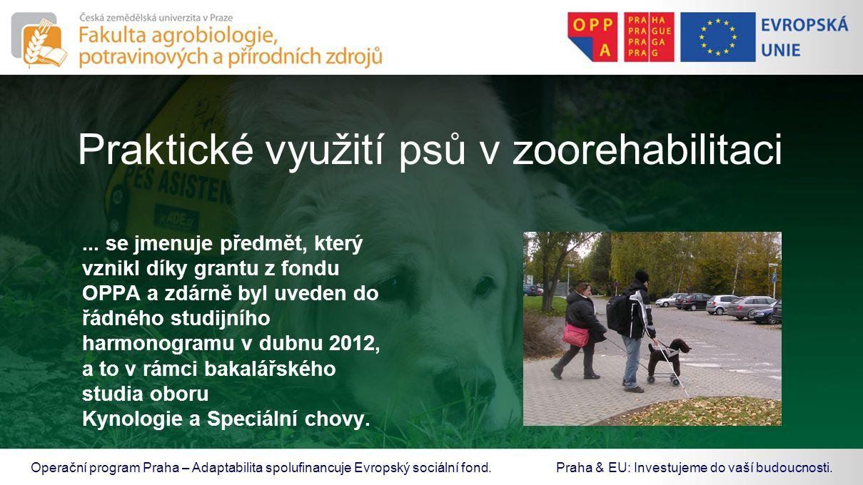 Praktické využití psů v zoorehabilitaci... se jmenuje předmět, který vznikl díky grantu z fondu OPPA a zdárně byl uveden do řádného studijního harmono