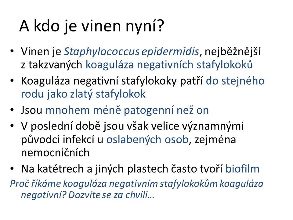 A kdo je vinen nyní? Vinen je Staphylococcus epidermidis, nejběžnější z takzvaných koaguláza negativních stafylokoků Koaguláza negativní stafylokoky p
