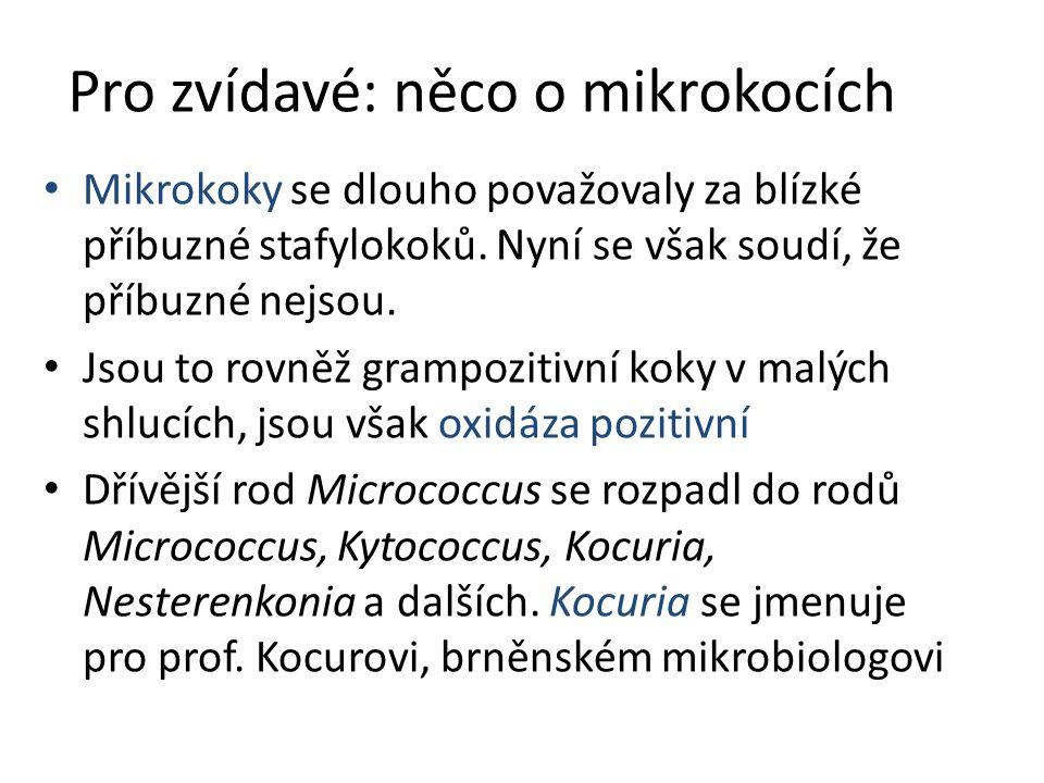 Pro zvídavé: něco o mikrokocích Mikrokoky se dlouho považovaly za blízké příbuzné stafylokoků. Nyní se však soudí, že příbuzné nejsou. Jsou to rovněž