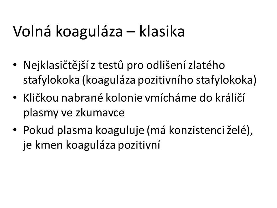 Volná koaguláza – klasika Nejklasičtější z testů pro odlišení zlatého stafylokoka (koaguláza pozitivního stafylokoka) Kličkou nabrané kolonie vmícháme do králičí plasmy ve zkumavce Pokud plasma koaguluje (má konzistenci želé), je kmen koaguláza pozitivní