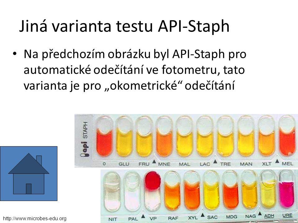 """Jiná varianta testu API-Staph Na předchozím obrázku byl API-Staph pro automatické odečítání ve fotometru, tato varianta je pro """"okometrické odečítání http://www.microbes-edu.org"""