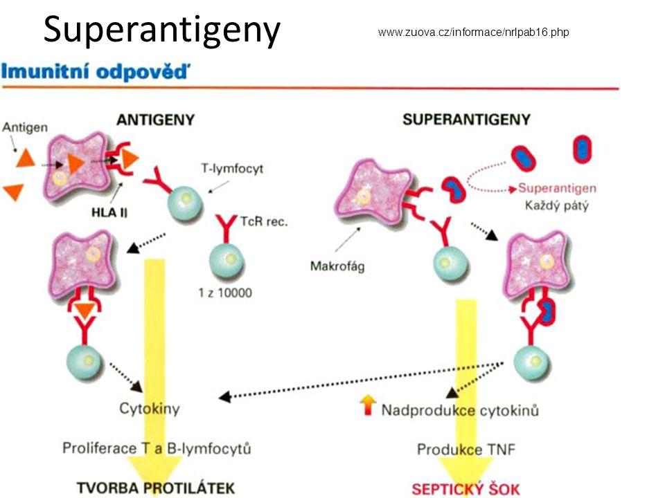 """Differenciální diagnostika stafylokoků II: kroky uvnitř rodu """"Staphylococcus"""