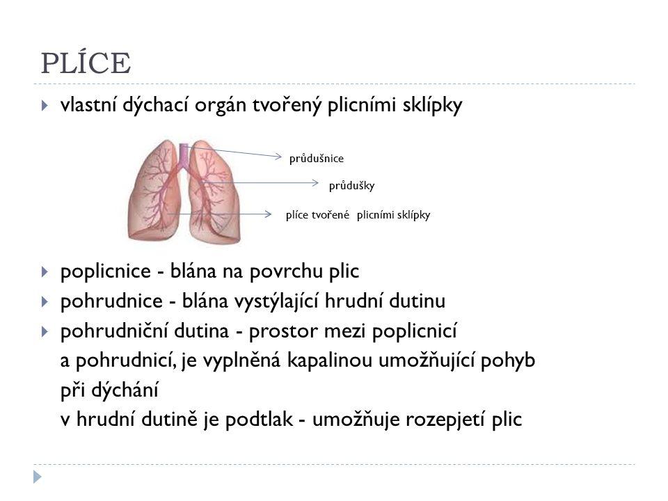 PLÍCE  vlastní dýchací orgán tvořený plicními sklípky průdušnice průdušky plíce tvořené plicními sklípky  poplicnice - blána na povrchu plic  pohrudnice - blána vystýlající hrudní dutinu  pohrudniční dutina - prostor mezi poplicnicí a pohrudnicí, je vyplněná kapalinou umožňující pohyb při dýchání v hrudní dutině je podtlak - umožňuje rozepjetí plic