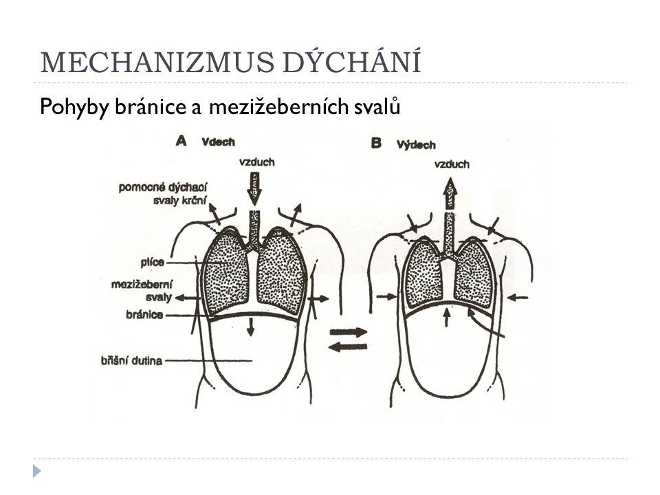 DÝCHÁNÍ  reflexní řízení, ústředí je v prodloužené míše, zástavu dechu nelze ovlivnit vůlí  vdech – aktivní děj, zvětšování hrudní dutiny za účasti bránice a mezižeberních svalů (bránice klesá)  výdech – pasivní děj, zmenšování hrudní dutiny (bránice stoupá)  kyslíkový dluh – vzniká při nedostatečném okysličování např.