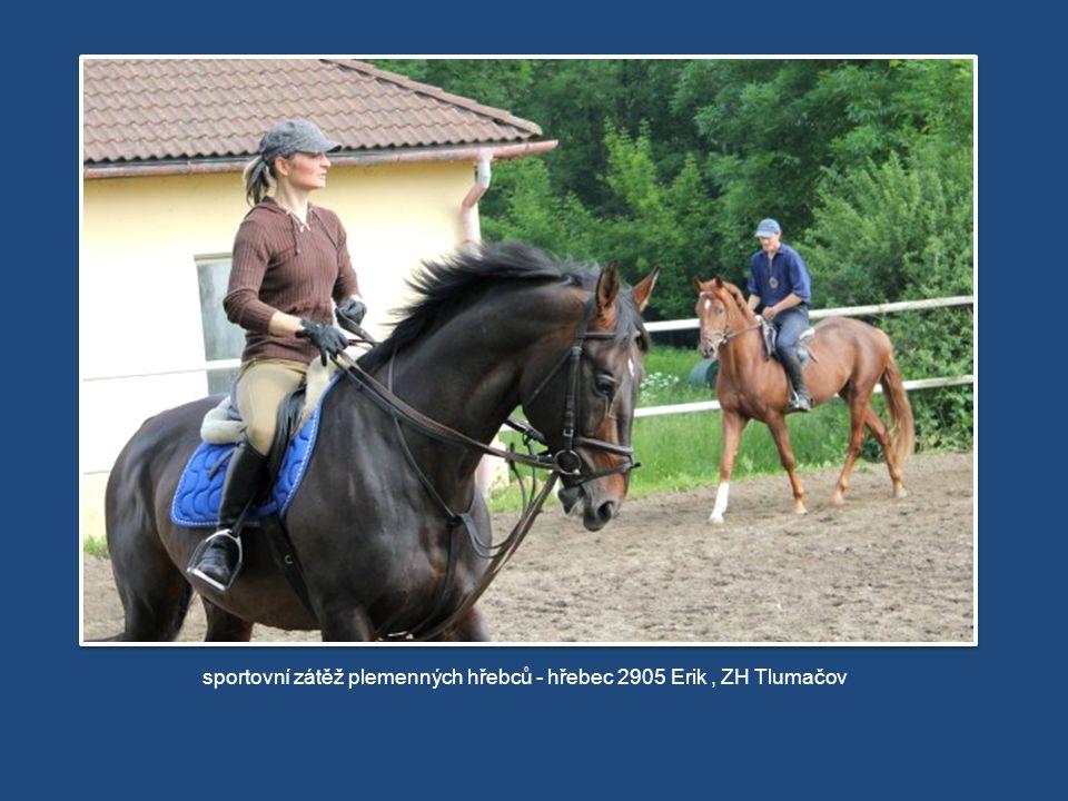 sportovní zátěž plemenných hřebců - hřebec 2905 Erik, ZH Tlumačov