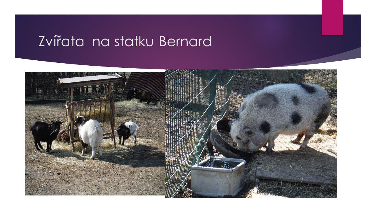 Zvířata na statku Bernard