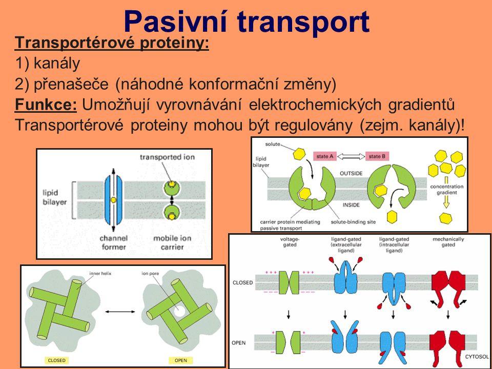 Pasivní transport Transportérové proteiny: 1) kanály 2) přenašeče (náhodné konformační změny) Funkce: Umožňují vyrovnávání elektrochemických gradientů Transportérové proteiny mohou být regulovány (zejm.