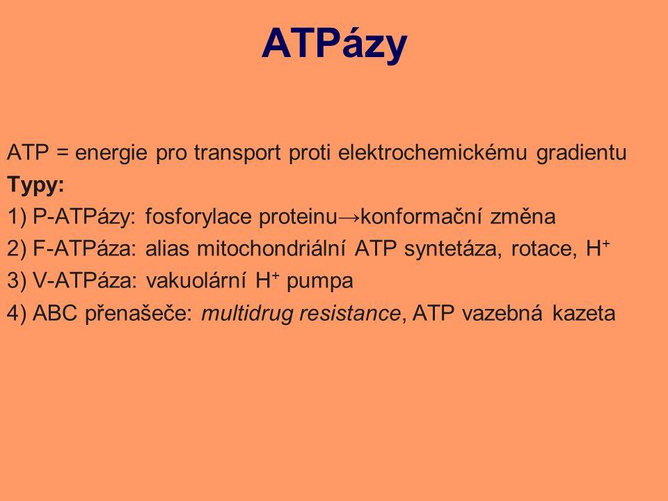 ATPázy ATP = energie pro transport proti elektrochemickému gradientu Typy: 1)P-ATPázy: fosforylace proteinu→konformační změna 2)F-ATPáza: alias mitochondriální ATP syntetáza, rotace, H + 3)V-ATPáza: vakuolární H + pumpa 4)ABC přenašeče: multidrug resistance, ATP vazebná kazeta