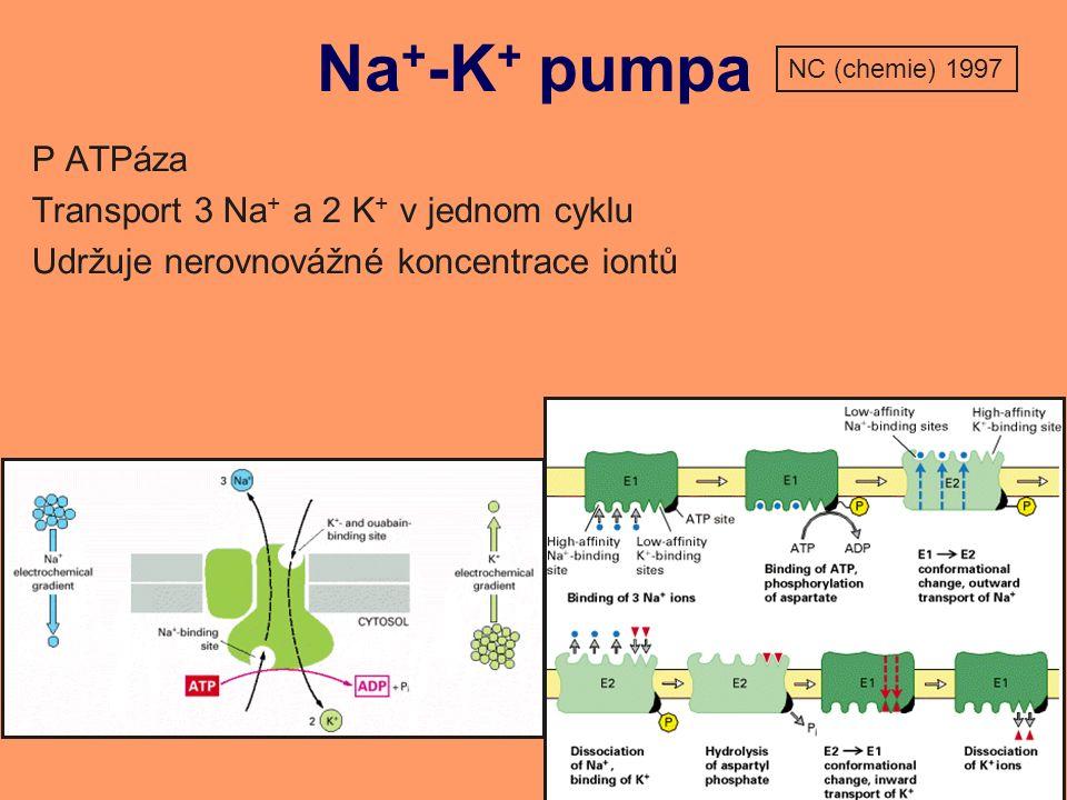 Na + -K + pumpa P ATPáza Transport 3 Na + a 2 K + v jednom cyklu Udržuje nerovnovážné koncentrace iontů NC (chemie) 1997