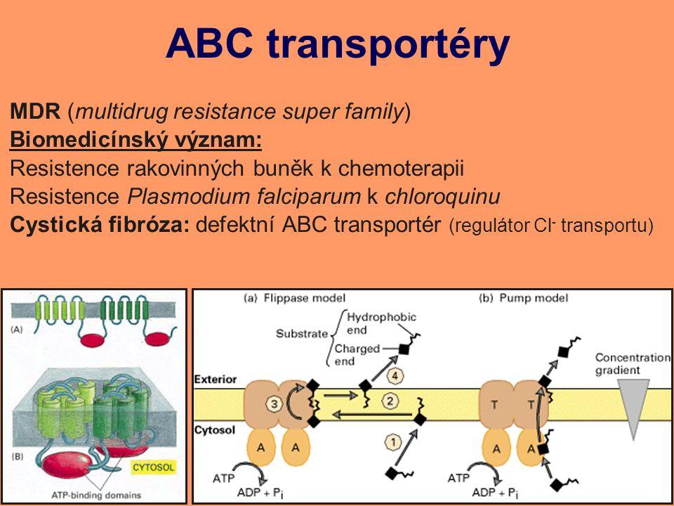 ABC transportéry MDR (multidrug resistance super family) Biomedicínský význam: Resistence rakovinných buněk k chemoterapii Resistence Plasmodium falciparum k chloroquinu Cystická fibróza: defektní ABC transportér (regulátor Cl - transportu)