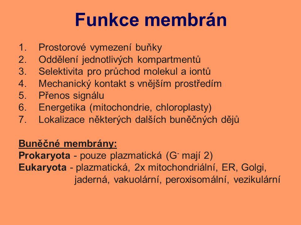 Funkce membrán 1.Prostorové vymezení buňky 2.Oddělení jednotlivých kompartmentů 3.Selektivita pro průchod molekul a iontů 4.Mechanický kontakt s vnějším prostředím 5.Přenos signálu 6.Energetika (mitochondrie, chloroplasty) 7.Lokalizace některých dalších buněčných dějů Buněčné membrány: Prokaryota - pouze plazmatická (G - mají 2) Eukaryota - plazmatická, 2x mitochondriální, ER, Golgi, jaderná, vakuolární, peroxisomální, vezikulární