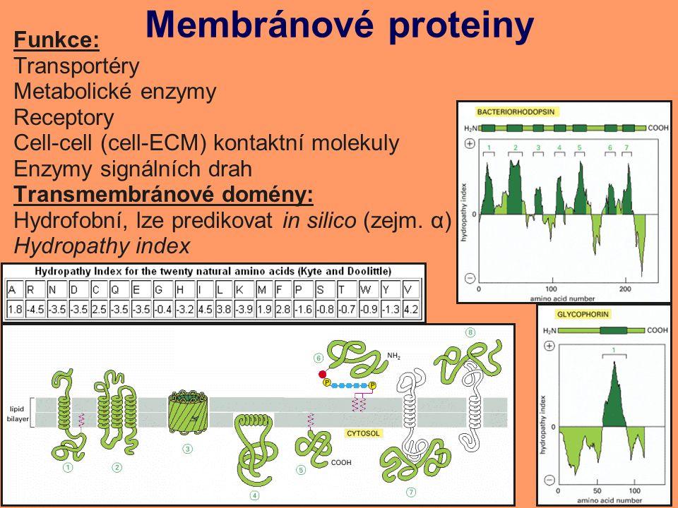 Membránové proteiny Funkce: Transportéry Metabolické enzymy Receptory Cell-cell (cell-ECM) kontaktní molekuly Enzymy signálních drah Transmembránové domény: Hydrofobní, lze predikovat in silico (zejm.