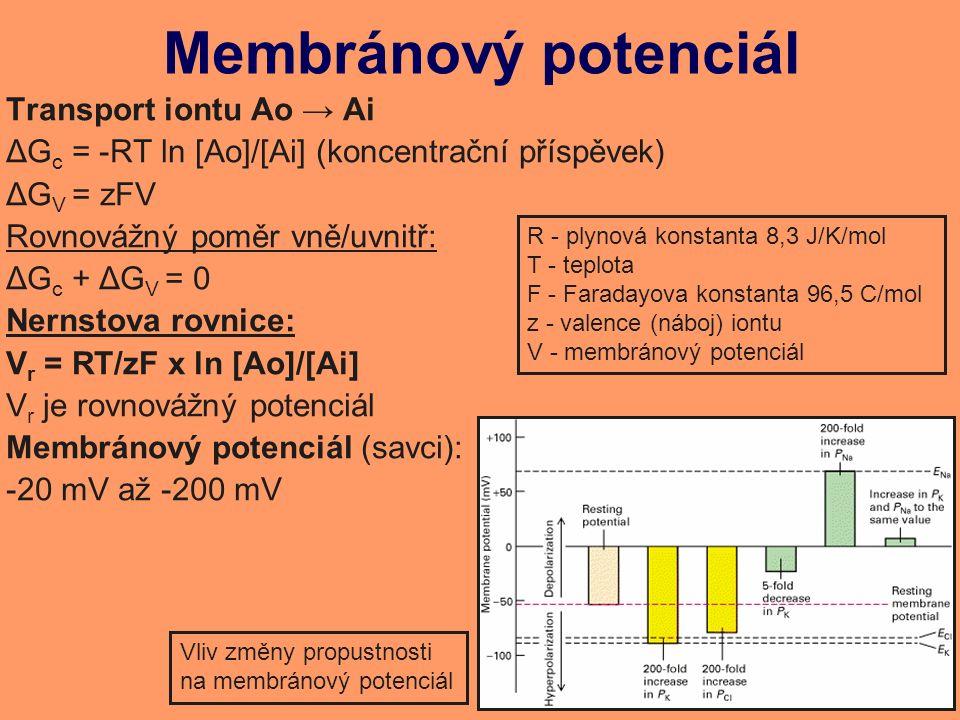 Membránový potenciál Transport iontu Ao → Ai ΔG c = -RT ln [Ao]/[Ai] (koncentrační příspěvek) ΔG V = zFV Rovnovážný poměr vně/uvnitř: ΔG c + ΔG V = 0 Nernstova rovnice: V r = RT/zF x ln [Ao]/[Ai] V r je rovnovážný potenciál Membránový potenciál (savci): -20 mV až -200 mV R - plynová konstanta 8,3 J/K/mol T - teplota F - Faradayova konstanta 96,5 C/mol z - valence (náboj) iontu V - membránový potenciál Vliv změny propustnosti na membránový potenciál