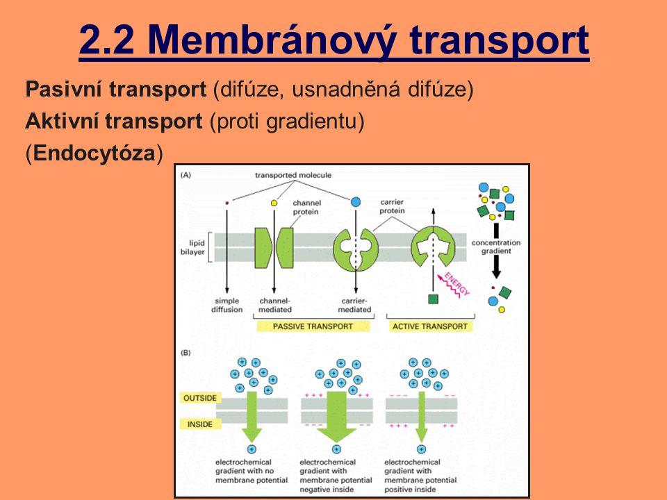 Příjem glukózy Střevní epitel (sliznice) Symport Na + /Glukóza (do buňky) Pasivní transport glukózy (do krve) Na + /K + pumpa