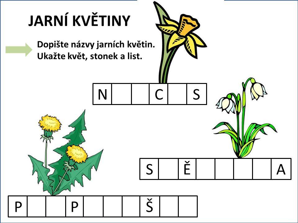 JARNÍ KVĚTINY PPŠNCSSĚA Dopište názvy jarních květin. Ukažte květ, stonek a list.